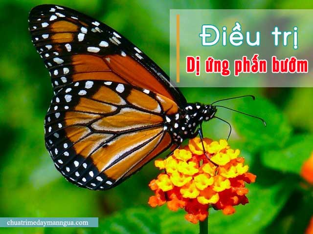dị ứng phấn bướm