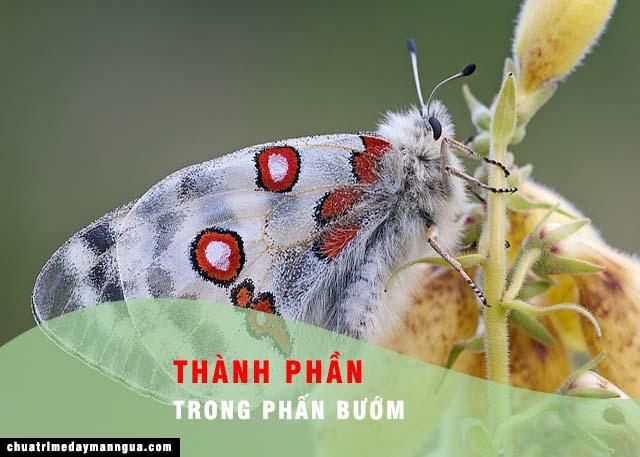 thành phần trong phấn bướm