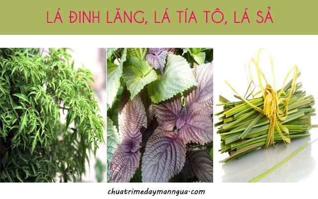 Điều trị mề đay bằng lá đinh lăng, lá tía tô và lá sả