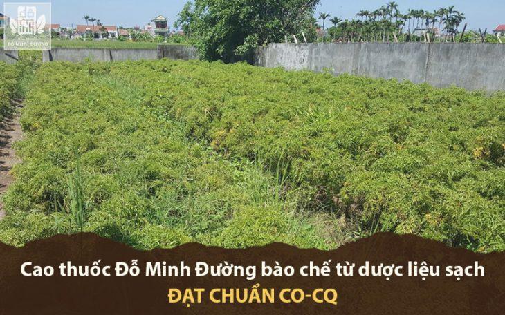 Vườn dược liệu chuẩn hóa của Đỗ Minh Đường