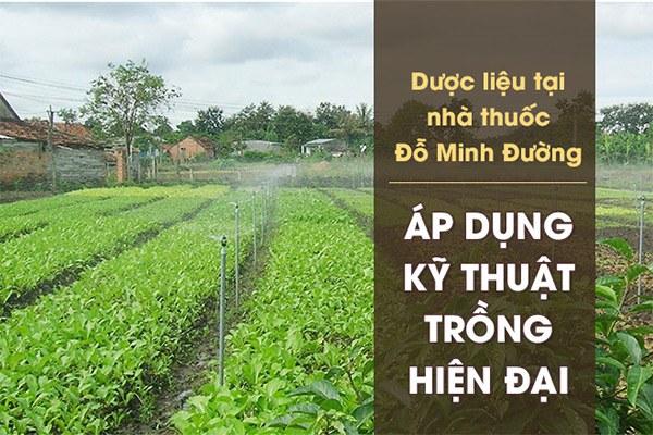 Vườn dược liệu của nhà thuốc Đỗ Minh Đường