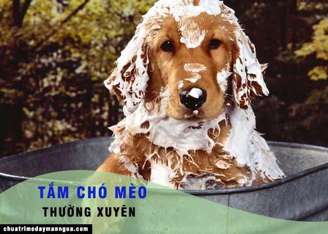 tắm cho chó mèo thường xuyên